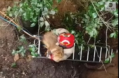 Watch:-Dog-rescued-from-40-foot-sinkhole-in-Florida