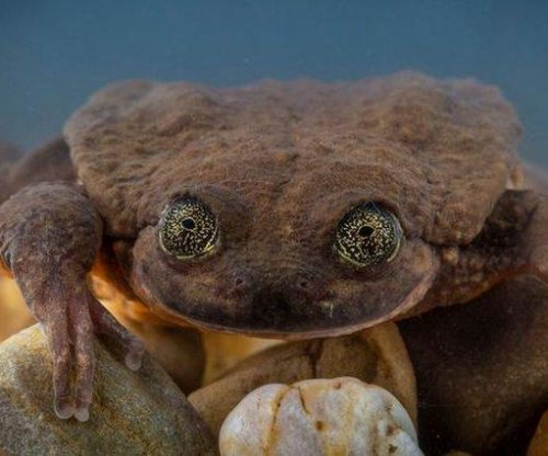 Romeo, world's loneliest frog, finally scores a date