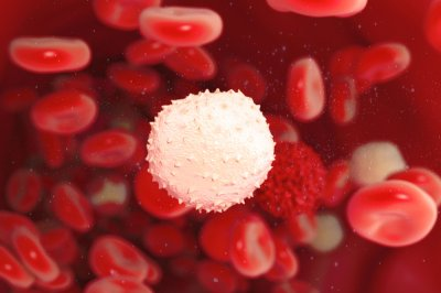 Study: Cellular frenzy strengthens the body's immune system, study says