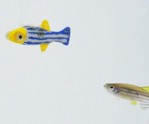 Zebrafish happy to hang out with lifelike robotic dopplegangers