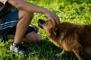 Fear may be the reason dogs bark, bite at some people, study says