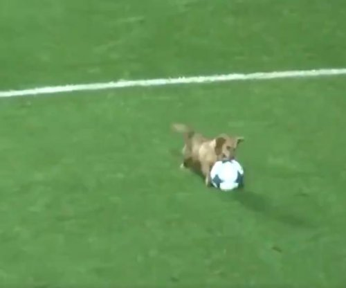 Athletic dog interrupts Argentinian soccer game