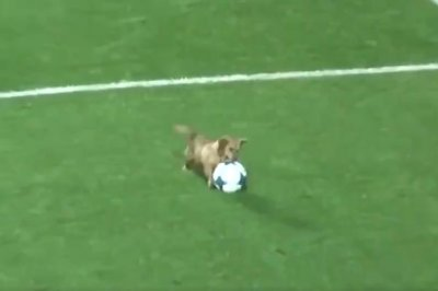 Athletic dog interrupts Argentinian soccer game