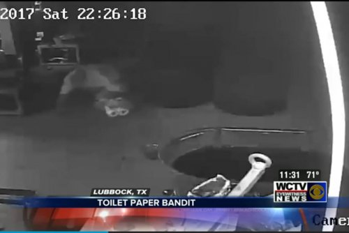 'Toilet Paper Bandit' takes cash, tissue from Texas tire store