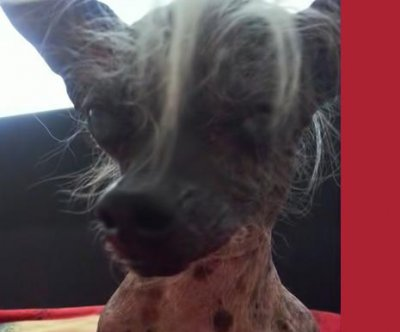 World's ugliest dog 'SweePee Rambo' has bowed legs, oozing sore