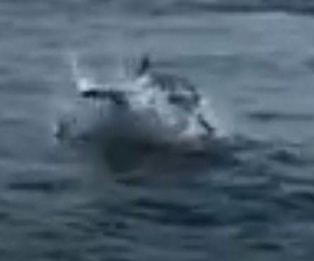 Great white shark steals fisherman's catch off Massachusetts