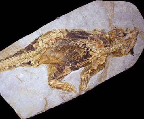 Study: Dinosaurs' color patterns reveal habitat preferences