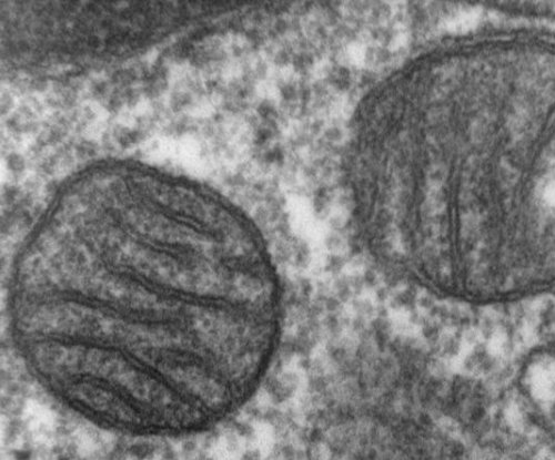 Study links autism to mitochondrial DNA