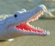 'Alligator' reported on Massachusetts highway was plastic toy