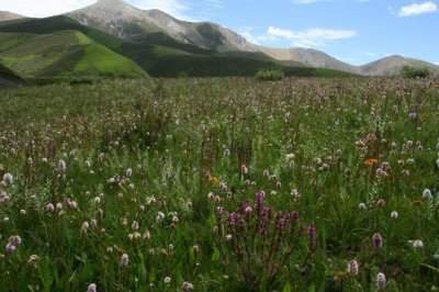 China's Hengduan Mountains host some of the oldest flower lineages