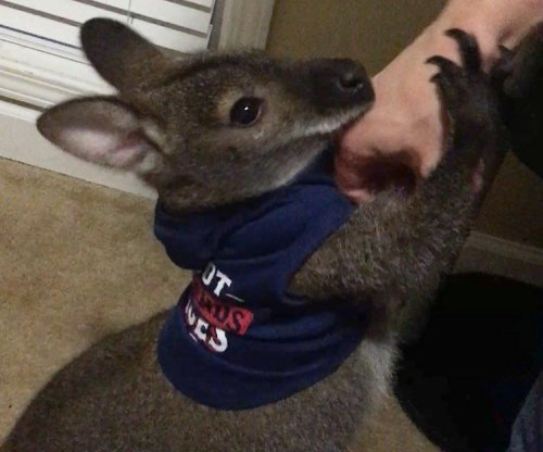Neighbors searching for escaped wallaby in Mississippi