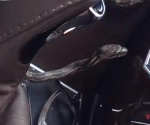 Snake slithers out of vent in Virginia woman's SUV