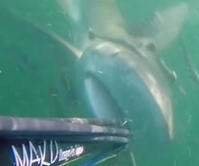 Territorial shark bites diver's spear gun in South Carolina