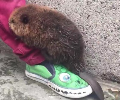 Adorable baby beaver delights commuters at D.C. Metro station