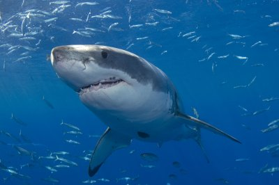 Shark attacks man at Cape Cod beach
