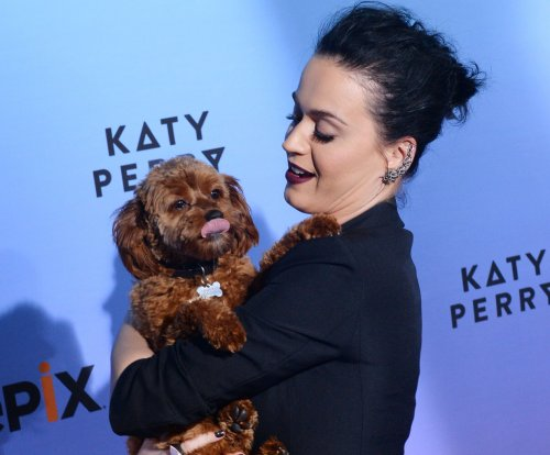 Katy Perry accidentally posts her phone number on Instagram and Twitter