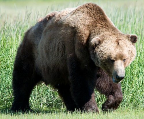Man attacked by bear while walking dogs at Alaska airport