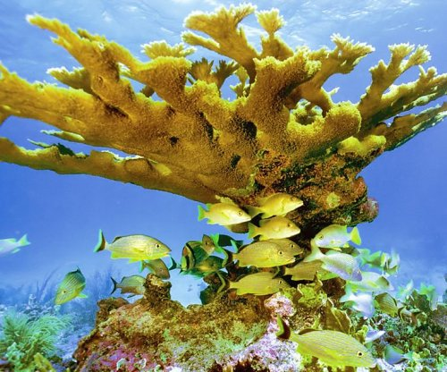 Coral survey reveals 5,000-year-old genotypes