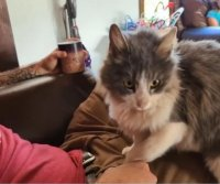Arizona family reunited with cat lost for months in Oregon