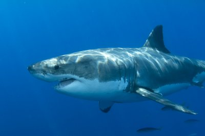Shark attacks worldwide reached all-time high in 2015