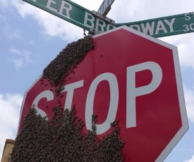 Massive swarm covers Texas stop sign in full bee-beard