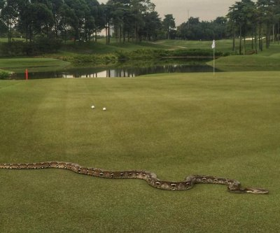 6-foot python removed from PGA tour golf course in Malaysia