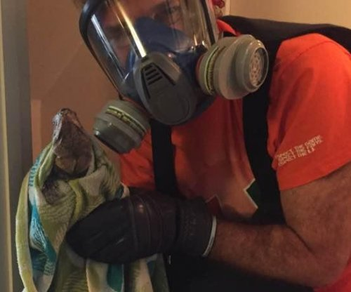 Florida man dons riot gear to remove iguana from toilet