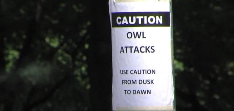 Beware of Attack Owl Sign