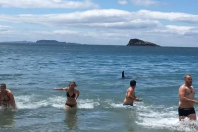 Swimmers run for shore when killer whale surfaces feet away
