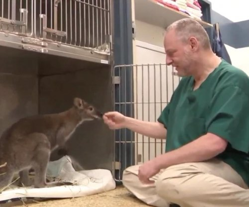 Malnourished, caged wallaby found in New York garage