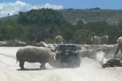 Rhinoceros attacks SUV at safari park in Mexico
