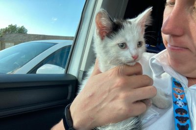 , Kitten survives 230-mile trip in engine compartment of car, Forex-News, Forex-News