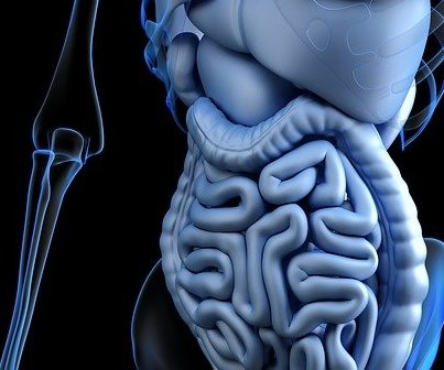 Gut immune cells may play key role in MS