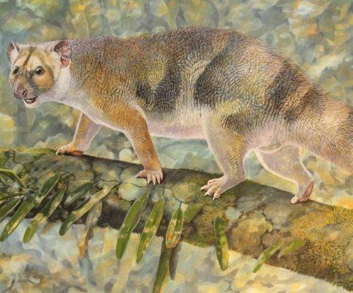 Extinct mini marsupial lion named for Sir David Attenborough