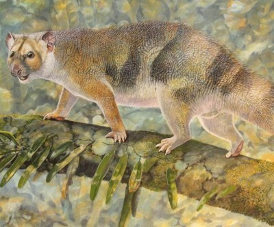 Extinct mini marsupial lion named for Sir David Attenborough