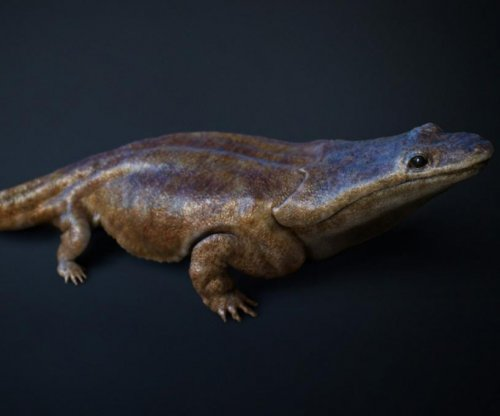 Killer salamanders dominated ancient Portugal