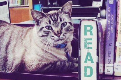 Texas town reverses beloved library cat's eviction