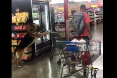 Browsing dog pushes shopping cart at California grocery store