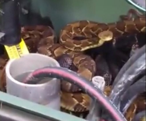 Rattlesnakes found napping in Pennsylvania transformer box