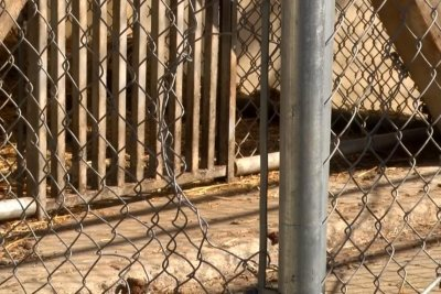 Bear captured after escape from wildlife rehab in Montana