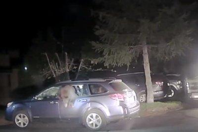 California deputy breaks window to rescue bear from Subaru