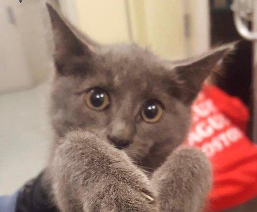 Kitten rescued from Massachusetts highway tunnel