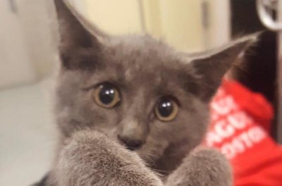 Kitten rescued from Massachusetts highway tunnel