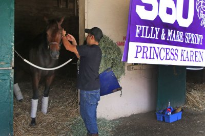 UPI Preview: Compelling storylines rule Breeder's Cup prep