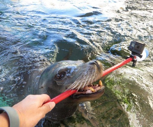 Sea lion shows off habitat using selfie stick