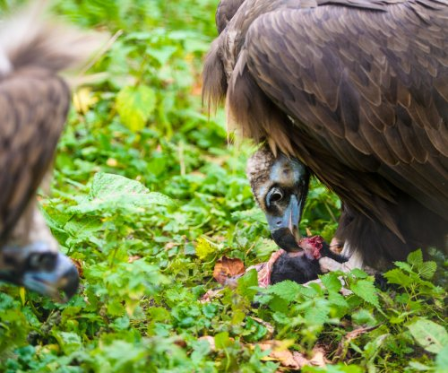 The guts of vultures harbor microbes deadly to humans