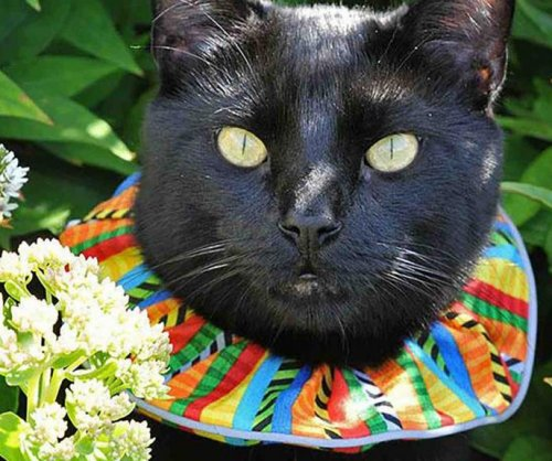 Can brightly colored collars keep cats from killing birds?