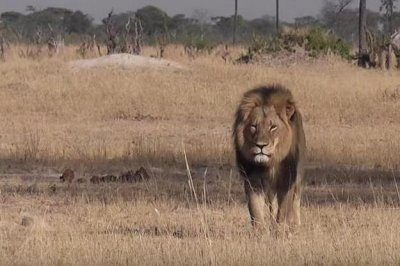 Vandals target Cecil the lion killer Walter Palmer's vacation home