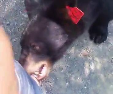 Officials: Black bear was showing aggression in hiker's viral video