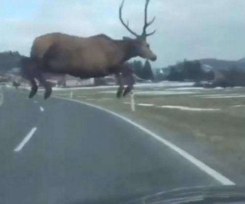 Deer leaps in front of car, narrowly evades disaster